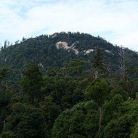 手つかずの森が残る弥山山頂付近