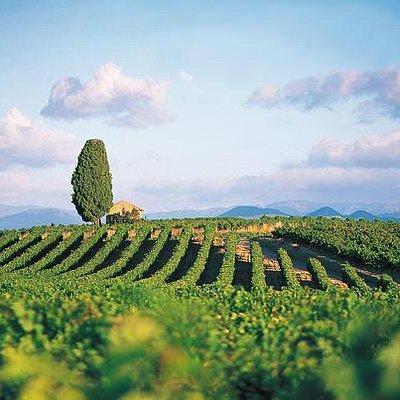 Paysage viticole en Languedoc