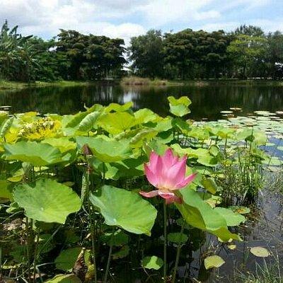 Palma Sola Botanical Garden - Taken 7/15/13