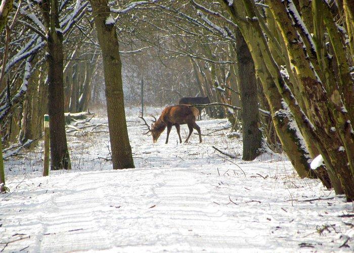 Winter in de Oostvaardersplassen