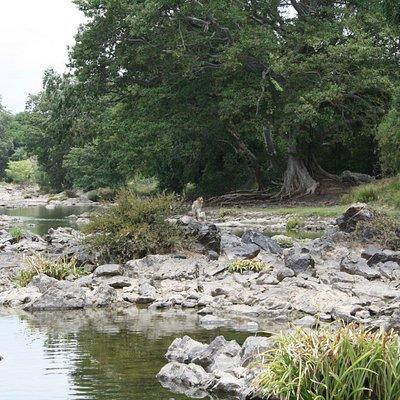 Bheemeshwari cauvery river