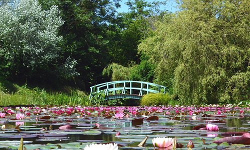 National Water Lily Collection