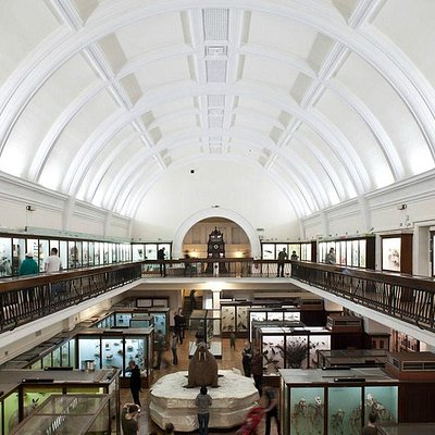 Natural History Gallery