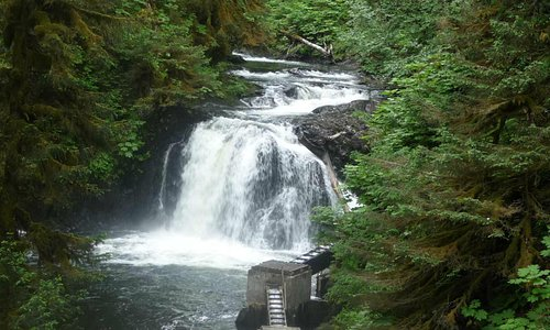 Afognak Island Waterfall in virgin spruce forest