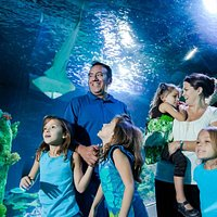 Walk through the amazing 360 degree ocean tunnel among sharks, rays and a rescued sea turtle