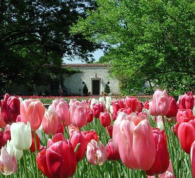 Dallas Blooms spring festival