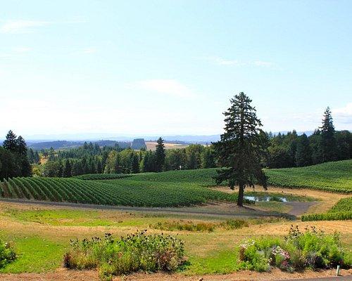 Amazing views at Alexana Winery