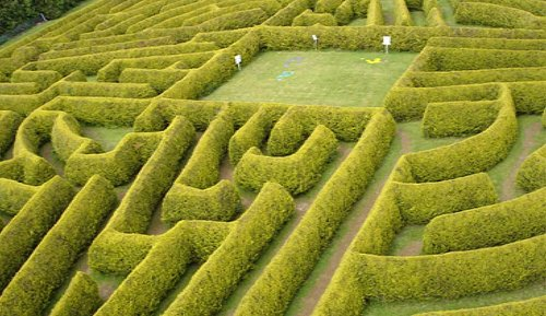 Arial shot of the hedge maze