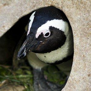 Provided by: Penguin Rehabilitation Center