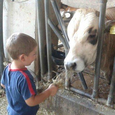 mio figlio che dà da mangiare a una mucca