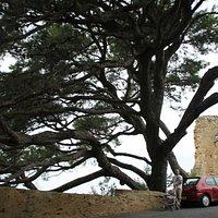 Le méga arbre