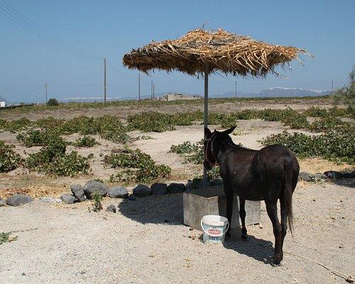 A donkey outside the shop