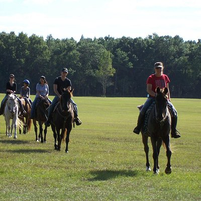 We have horses for all types of riders