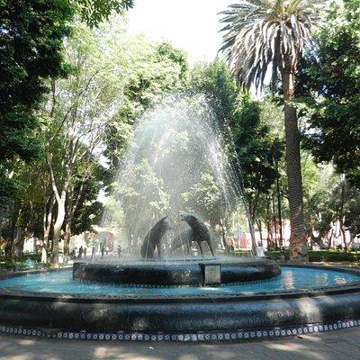Coyote fountain in Jardin Centenario, Coyoacan, D.F.