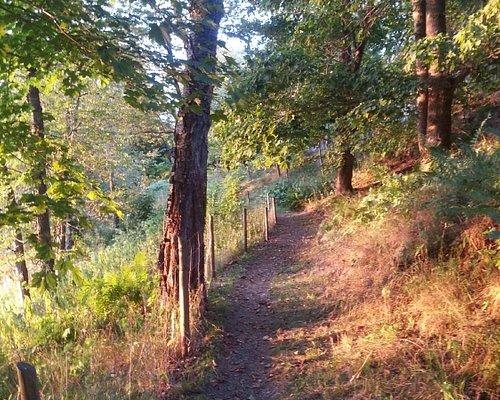 The path through the swedish wilderness