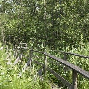 På spänger längs Näsumaviksleden