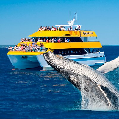 Best Value Whale Watch