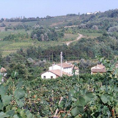 la nostra azienda immersa tra le colline dell'Oltrepo Pavese