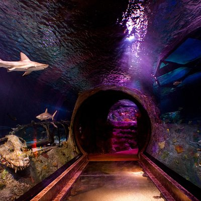 Take a walk across our ocean tunnel