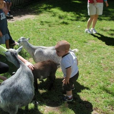 """Visiting the """"Maternity Ward"""" area of Mommy and baby goats"""