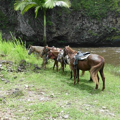 Horses resting by waterfall