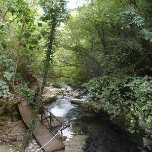Bosco attorno al Fiume Bussentino
