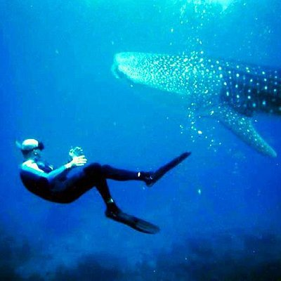 Jens with the Whale Shark