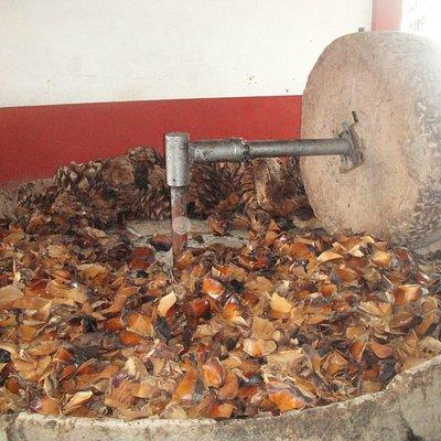 La procesadora del agave.