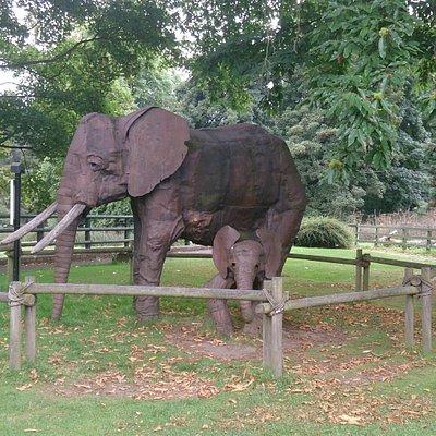 Elephants Caitlin loves to climb