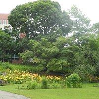 Beal Botanical Garden