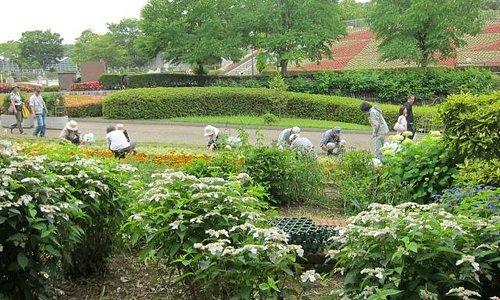 相模原市立麻溝公園・・・お花の手入れをするボランティアの方々