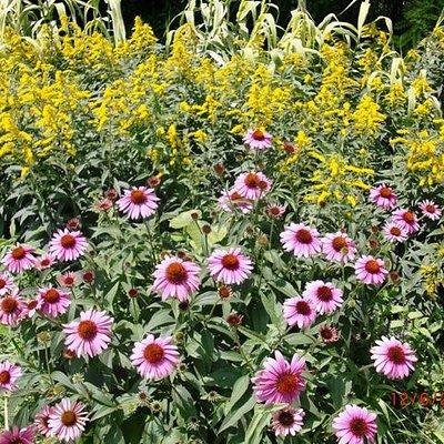 Herbacious border gardens.