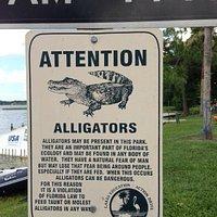 Alligator sign!