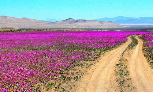 Desierto florido, naturaleza virginal, despues no haber ninguna vida, renace en plenitud y belle