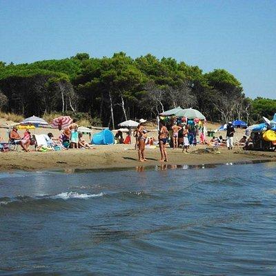 La spiaggia e la pineta