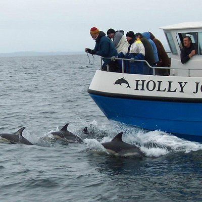 "Common dolphins bow-riding the ""Holly Jo"""