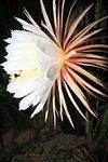 Flamingocyprus