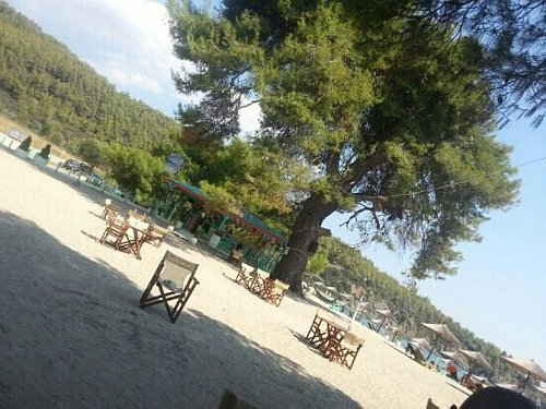 the tables under the pine trees