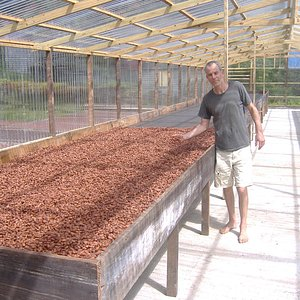 Cocoa solar power drying system