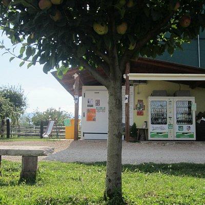Distributore automatico di latte pastorizzato, con panchine e scivolo per i bambini