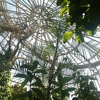 the butterfly dome