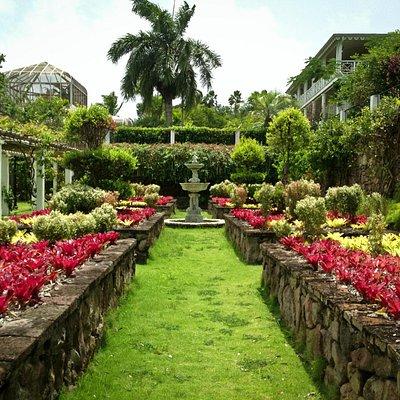 The Vine Garden