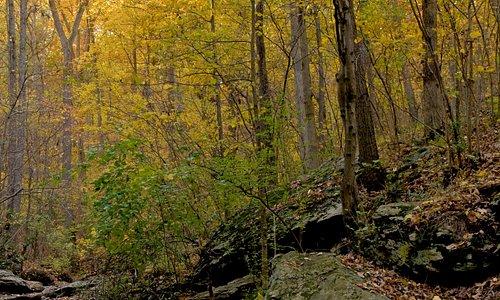 Oregon Ridge stream in the fall