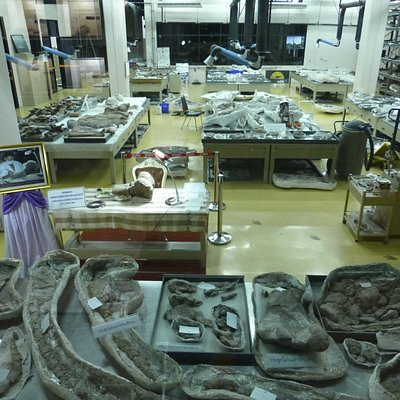 HRH Sirindhorn's examination table in the museum lab.