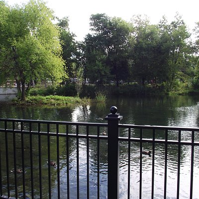 Pond for large trout