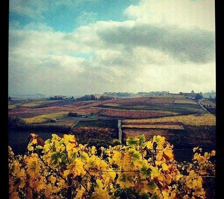 vista dalle vigne