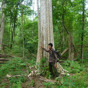 this is the jungle trekking and adventure trip .experience in cambodian ban lung .Rattakiri prov