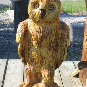 Owls, Racoons and other small sculptures available for SALE