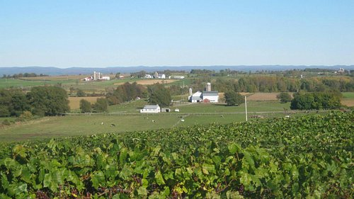 The view overlooking the grapes and the valley