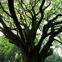 Arbre de la forêt de Brocéliande